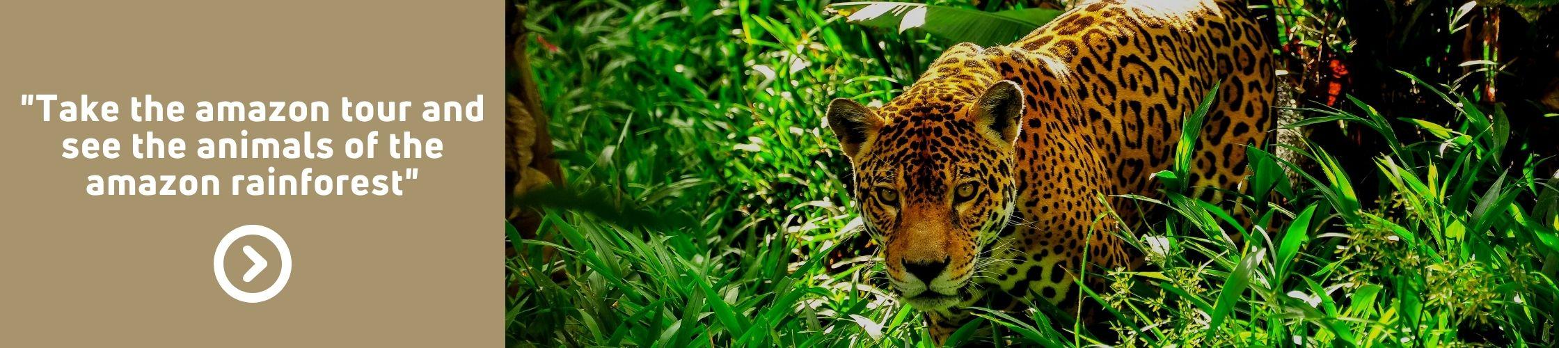 Ruta del río Amazonas   Tours por el Amazonas