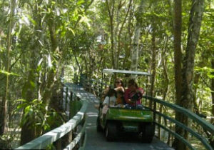 amazon rainforest tour