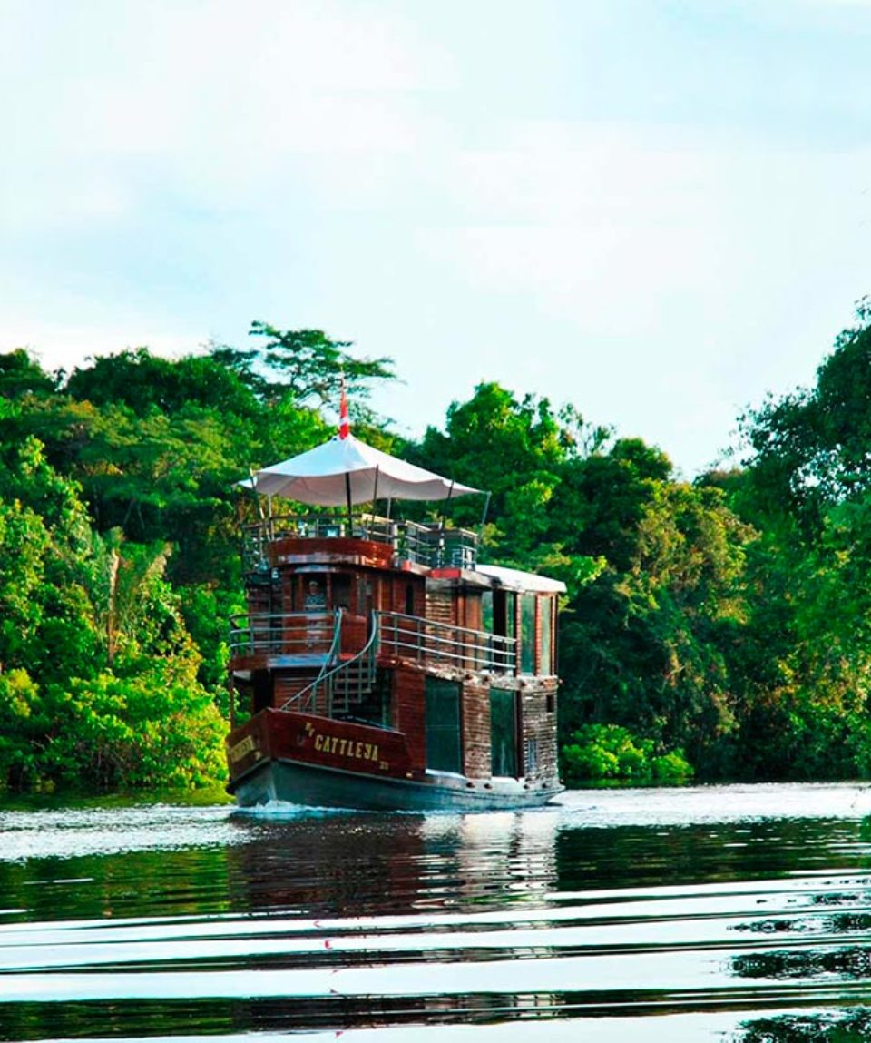 Cattleya-amazon-riverboat-peru