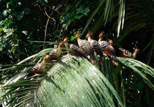 Madidi-Jungle-Ecolodge-bolivia5