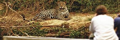 Southwild-Jaguar-Camp-brazil-pantanal2