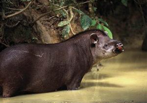 Southwild-Jaguar-Camp-brazil-pantanal6