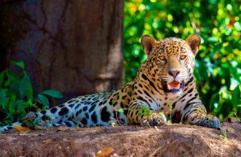 amazon-rainforest1