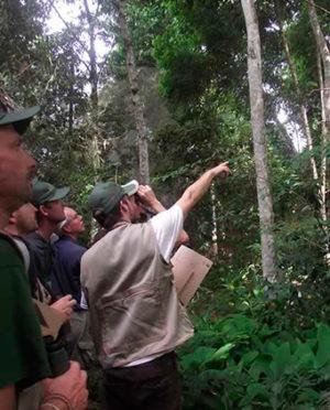 birdwatching-peru-amazon