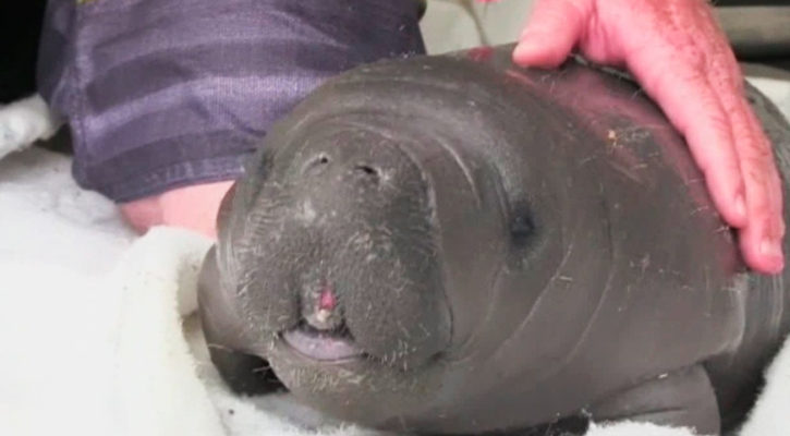 Visit the manatee rescue centre on cruise