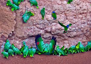 napo-wildlife-center-amazon-ecuador5