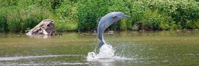 delfin amazon cruise