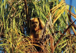 refugio-ecologico-caiman-brazil6