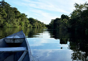amazon rainforest river cruises