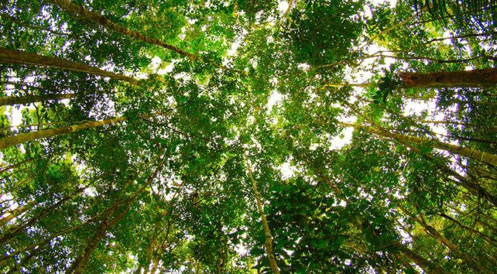 5 tips to book Amazon rainforest tours