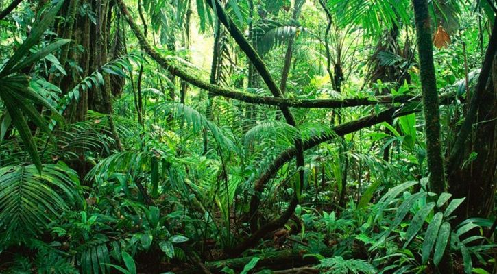 Amazing plant life of the Amazon