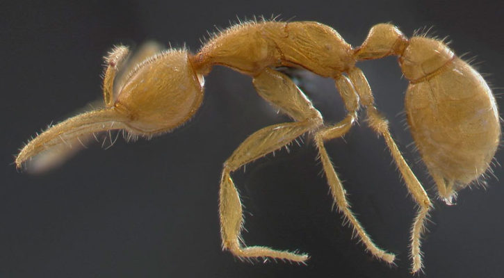 """""""Ant from Mars"""" discovered in Amazon Jungle"""