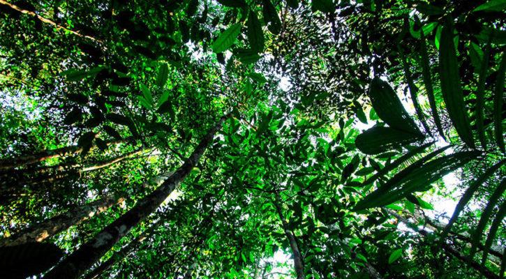 Brazil's Amazon Destruction Slows