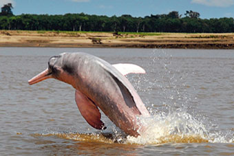 delfin cruises amazon river