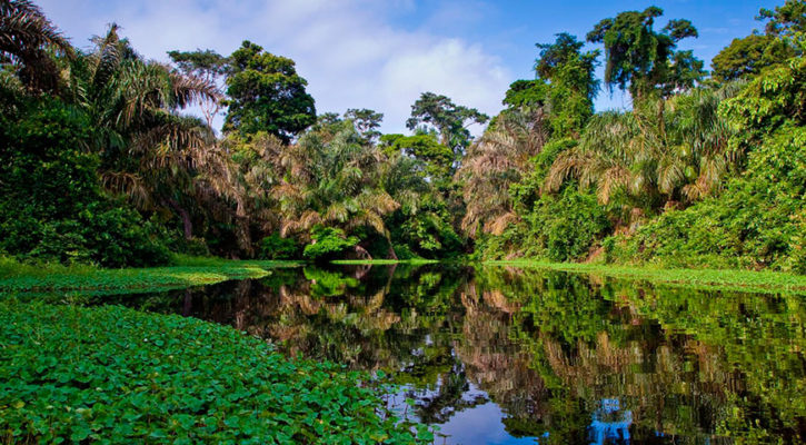 Is the Brazilian Amazon home to the world's largest river?