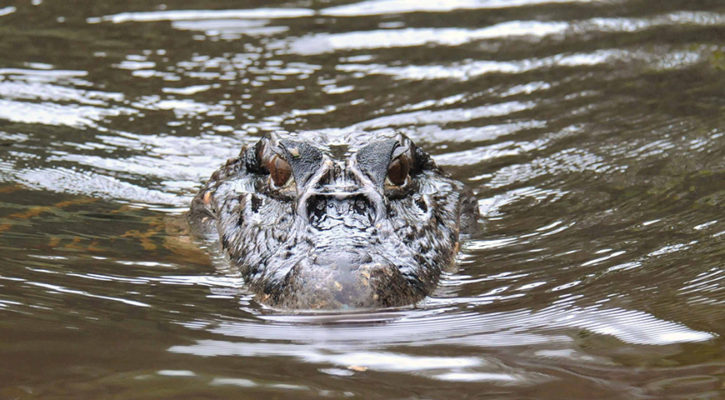 Eight animals to look out for on Amazon River trips