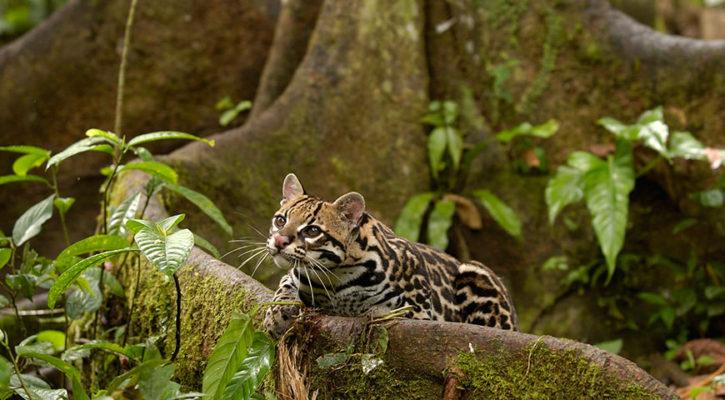How to photograph Amazon rainforest animals?
