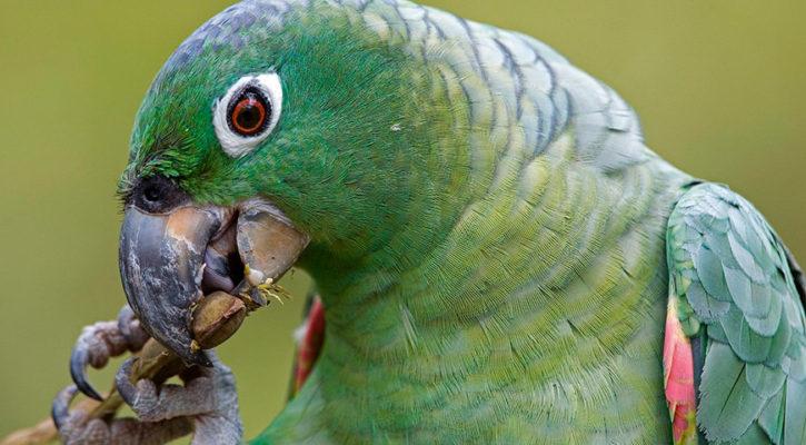 Rarest birds spotted on an Amazon cruise