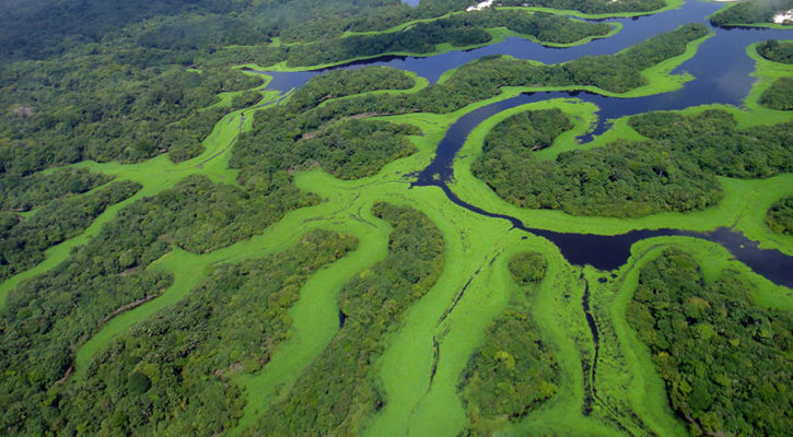 Must-See National Parks on Amazon Tours in Brazil