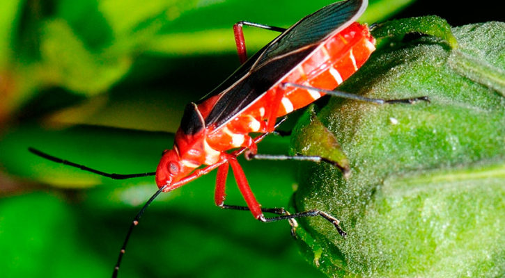 The most colourful insects in the jungle