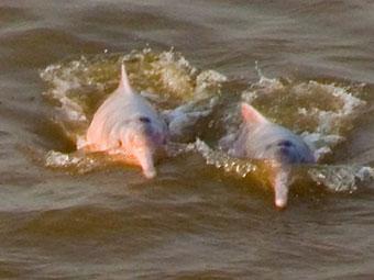 delfin ii amazon river cruises