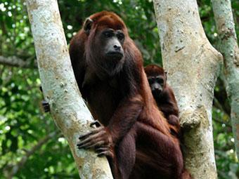 amazon rainforest brazil tour