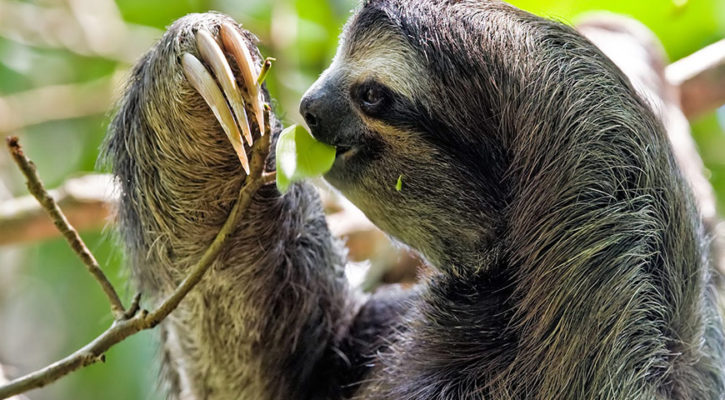 In which country can I spot the most animals in the Amazon rainforest?