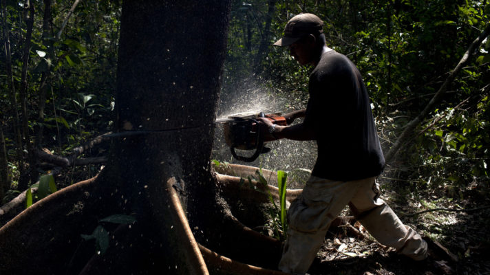 Why we're losing 54 million tons of carbon due to logging?