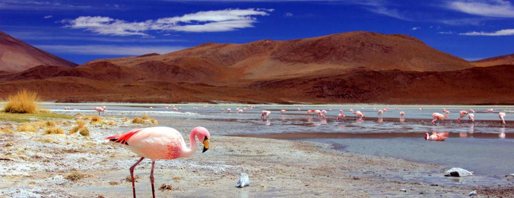 Bolivia-360º-tour15 | world tour amazon