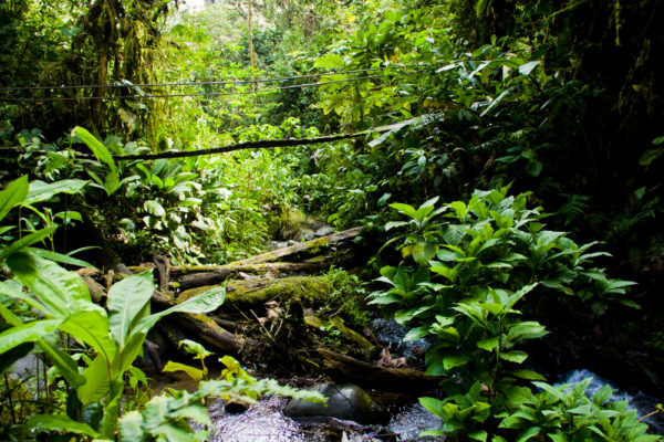 What Can You Do In the Amazon Rainforest?