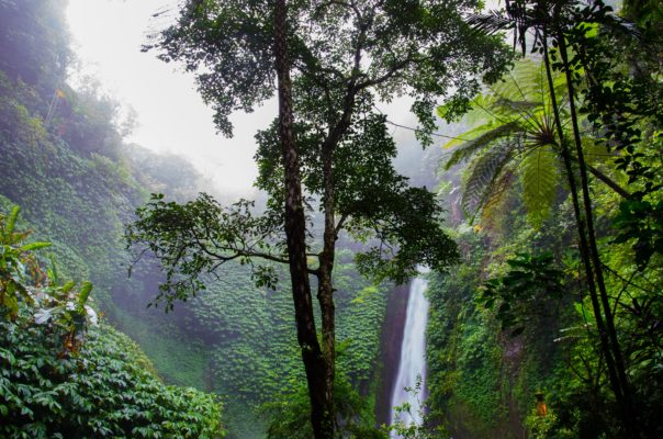 How to Save Tropical Rainforests?