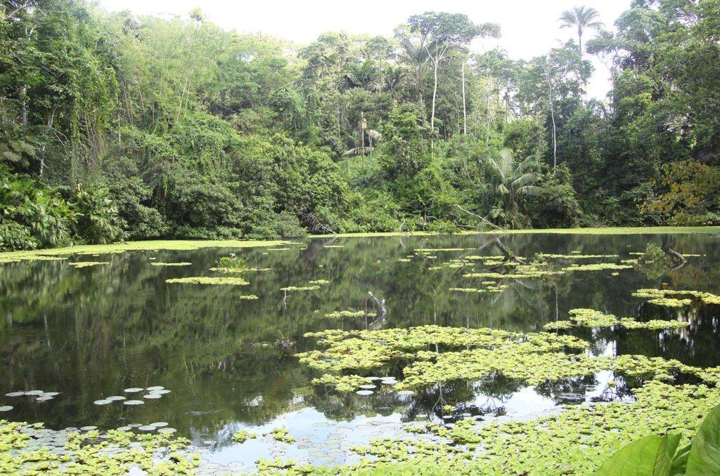 Amazon Rainforest River