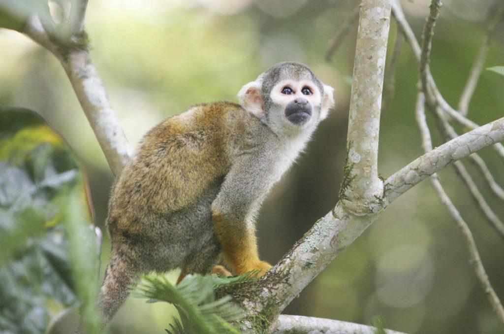 Animals in the Amazon | Monkeys