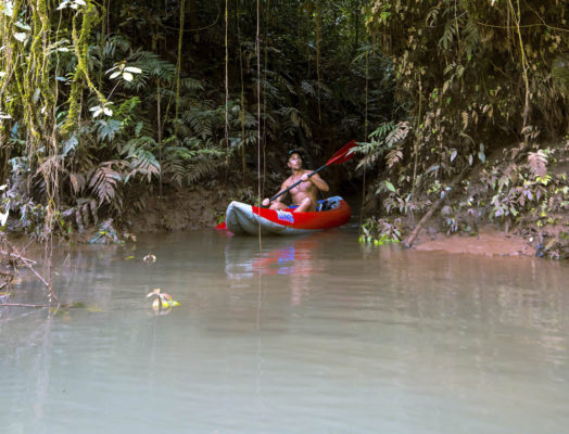 Rainforest Activities and Tours to Do on Your Cruise
