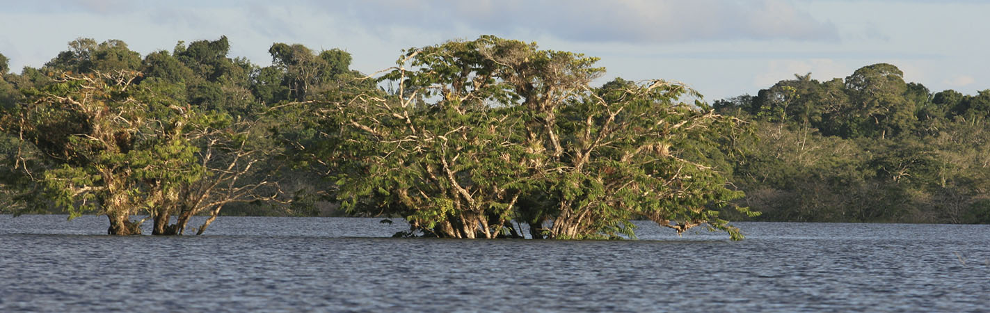 Cuyabeno Reserve | Ecuador | Amazon Rainforest