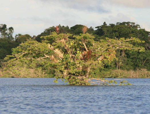 What to Know Before You Travel to the Amazon?