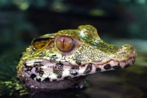 Reptils In the Amazon Rainforest