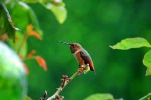 Bird Life In the Amazon Rainforest