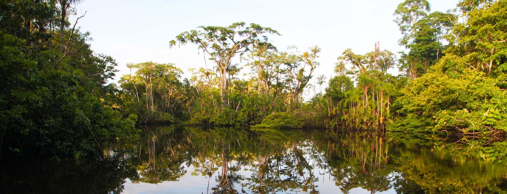 Amazon National Parks