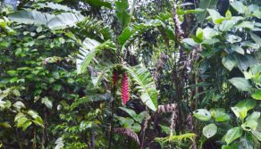 Medicinal Plants | Amazon Rainforest