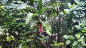 Medicinal Plants | Amazon Rainforest