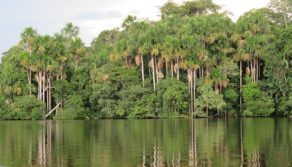 The tallest trees in the Amazon