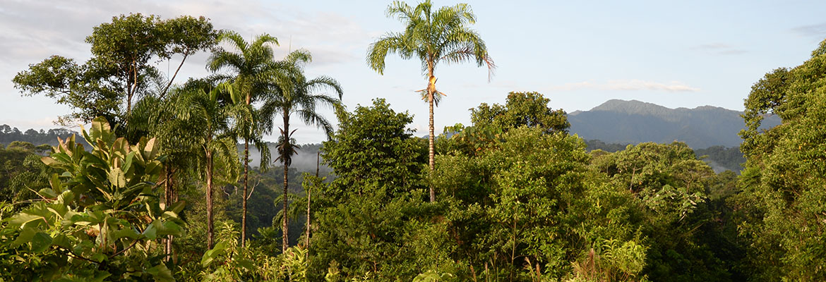 The tallest trees in the Amazon Rainforest