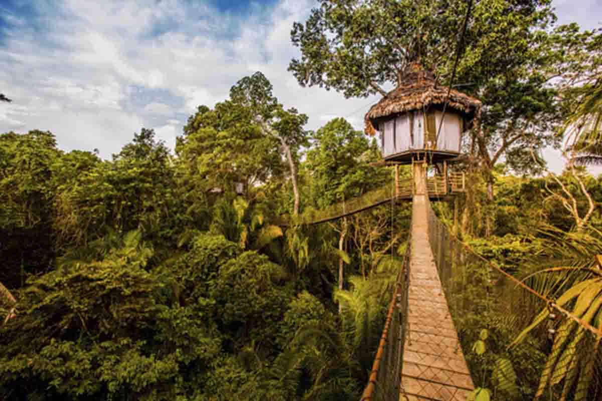 Amazon Lodges