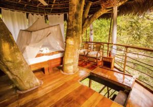 Tree house lodge 3