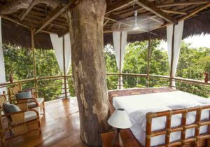 Tree house lodge 6