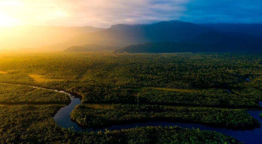 Brasil amazon rainforest